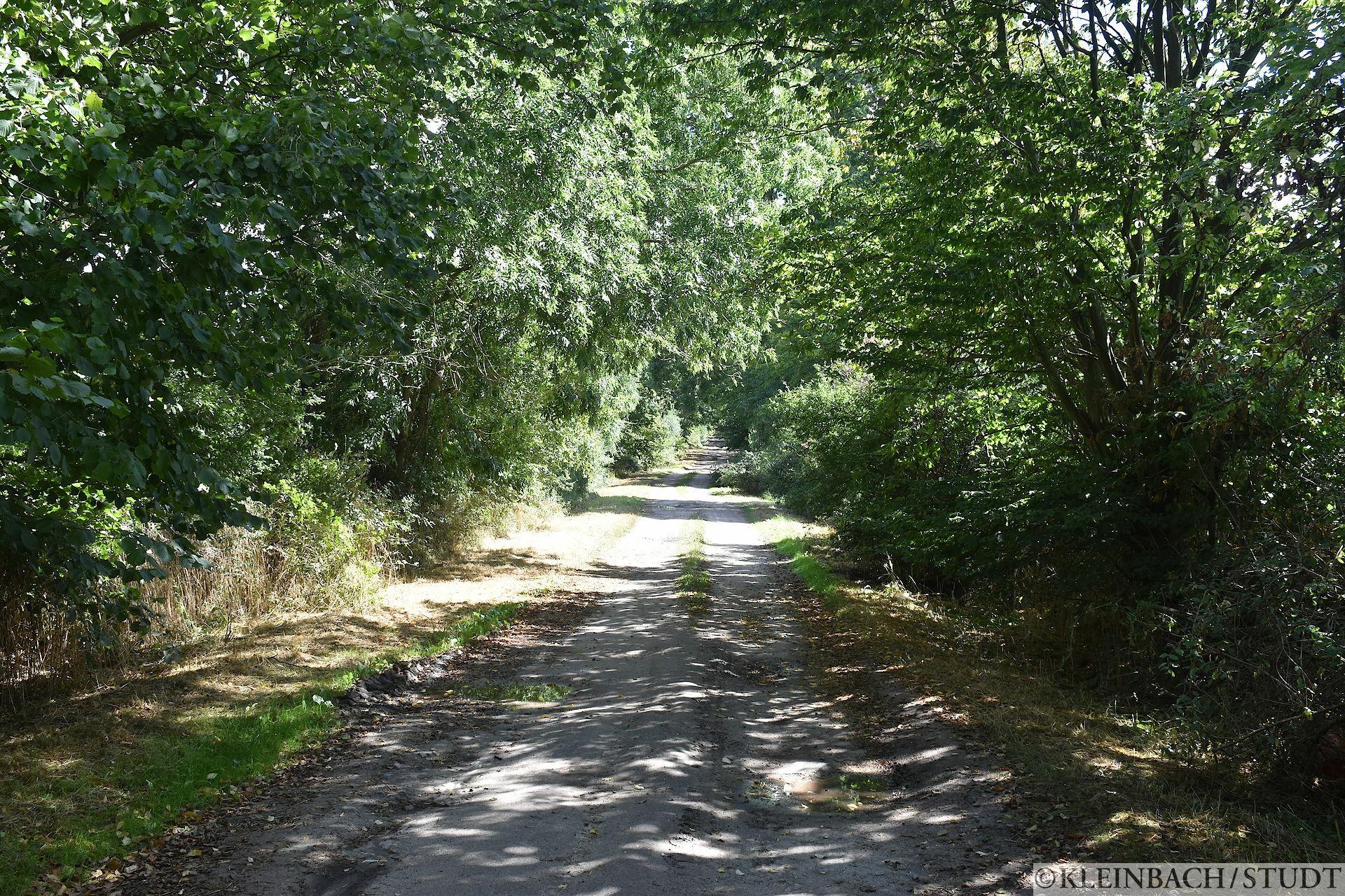 Auf dem deutschen TET (Trans European Trail)